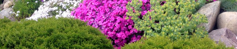 kwiaty-ofirmie